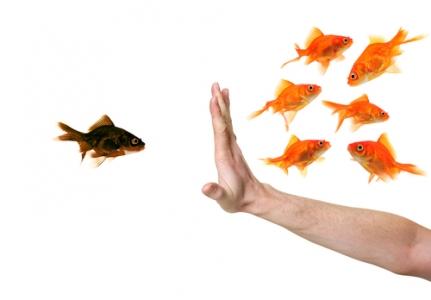 Проблема влазимопонимания между заказчиком и разработчиком: причины