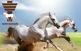 Создание сайта Республиканского центра олимпийской подготовки конного спорта и коневодства